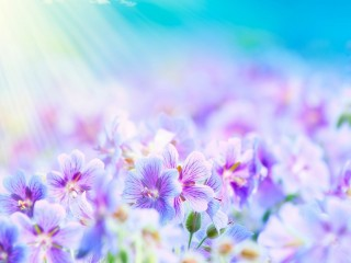 flowers-flower-colorful-nature-plant-petals-beautiful-wallpaper-high-resolution