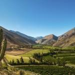 valle-del-elqui-paisaje-cactus-890×395